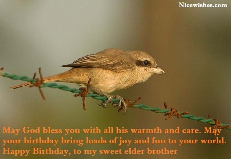 Sweet E-Card Birthday Wishes For Elder Erother