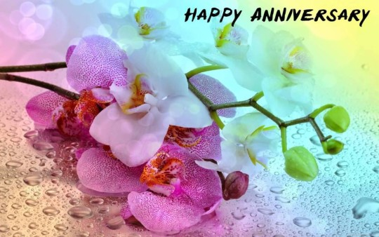 Unique Anniversary Wishes For Husband Image