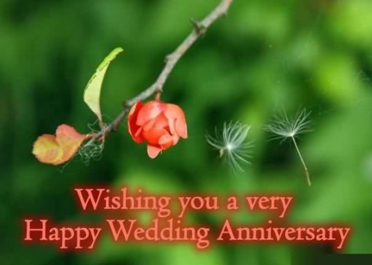 Beautiful Anniversary Wishes For Brother Wallpaper