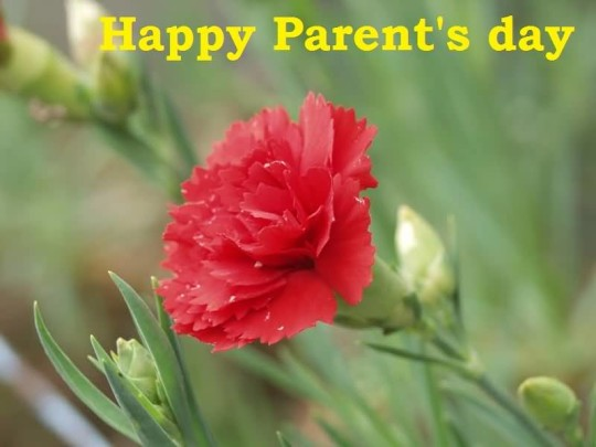 Lovely Happy Parent's Day Wallpaper