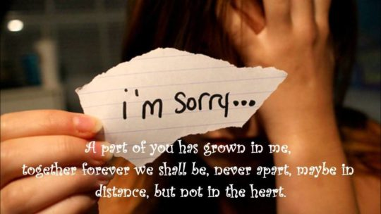 Great Sorry Quotes I Am Sorry