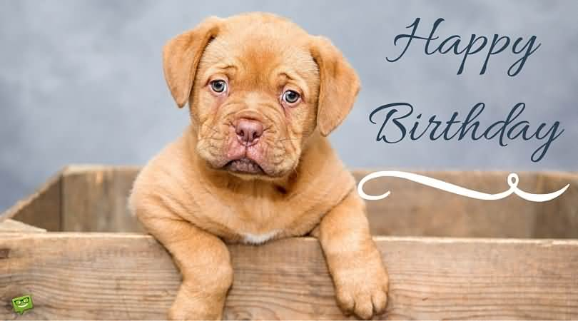 Cute Dog Greeting Happy Birthday