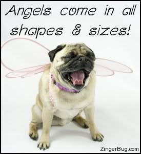 Beautiful Angels Come In All Shapes And Sizes Pug Dog Wings Picture