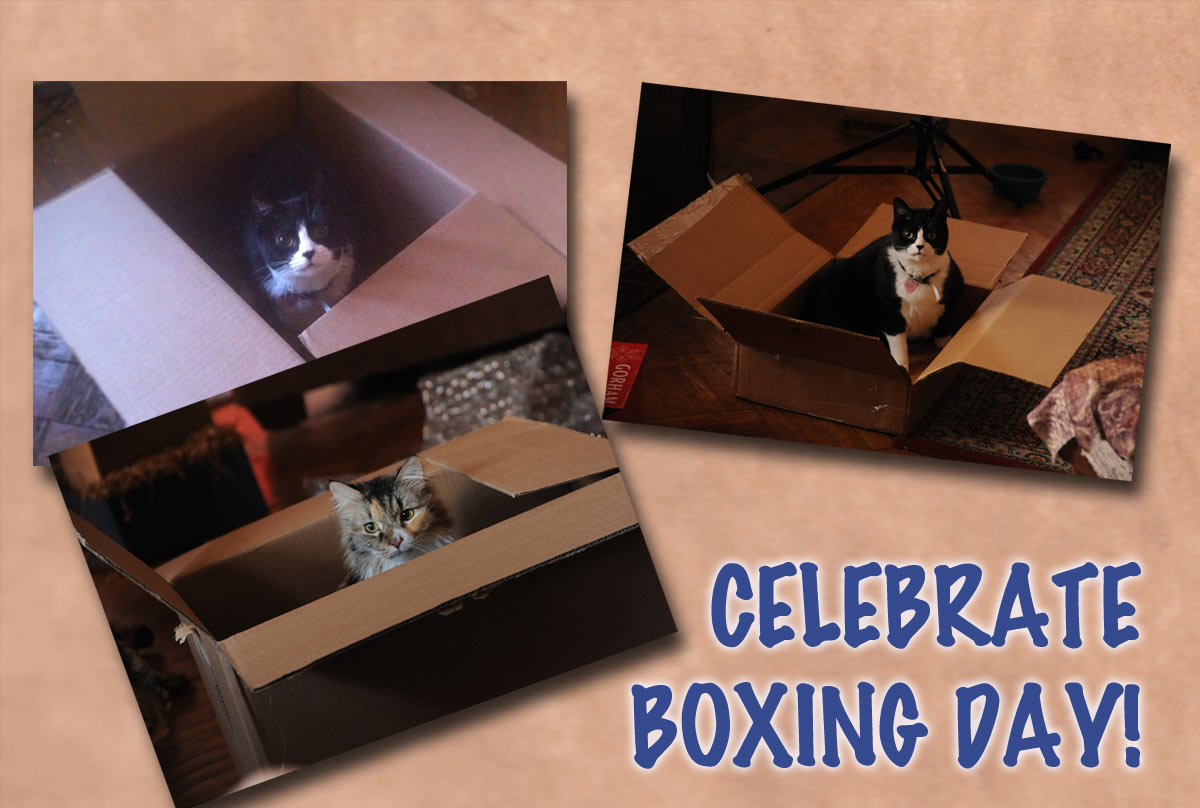 Cat Celebrate Boxing Day Picture