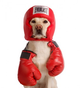 Cute Dog Celebrating Boxing Day Picture