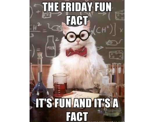 Friday Fun Fact Cat Meme