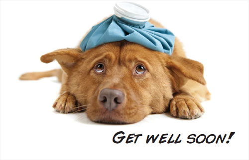 Get Well Soon Cute Dog Picture