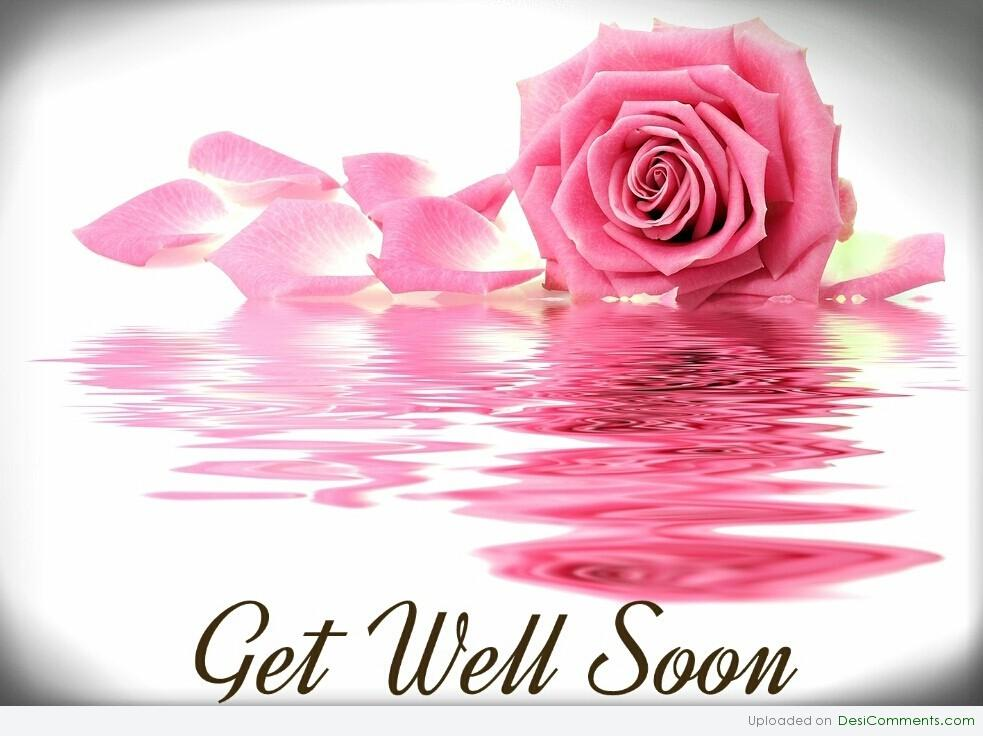 Get Well Soon Rose Image