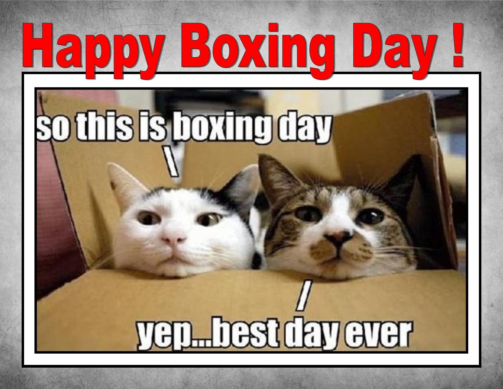 Happy Boxing Day So This Is Boxing Day Yep.. Best Day Ever