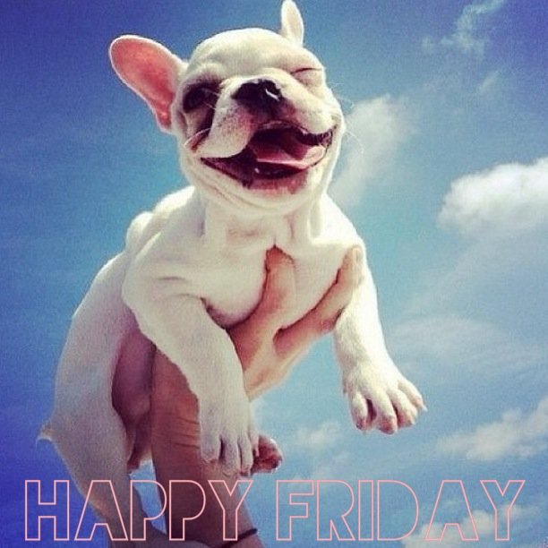 Happy Friday Funny Smiling Puppy Picture