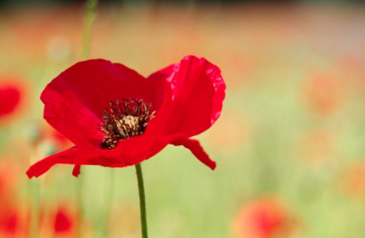 131-Remembrance Day Wishes