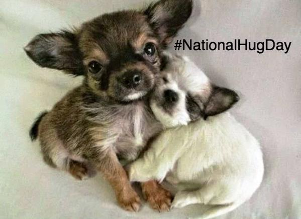 Cut Puppies Hug Day Image