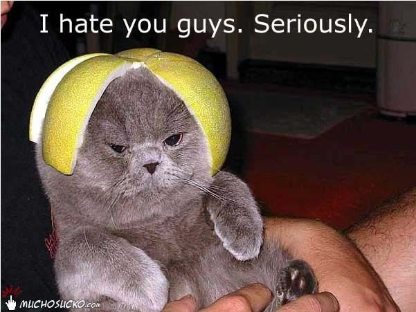 Funny Cat Meme I Hate You Guys Seriously Funny Cat