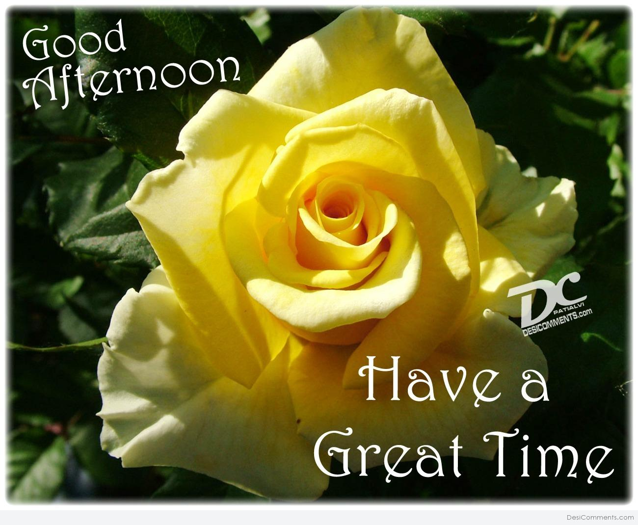 Good Afternoon Have A Great Time Yellow Rose Wallpaper