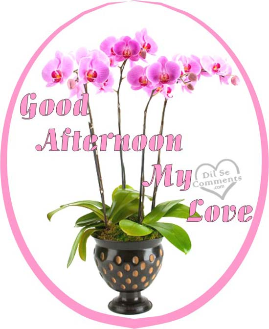 Good Afternoon My Love Greeting Flower Image