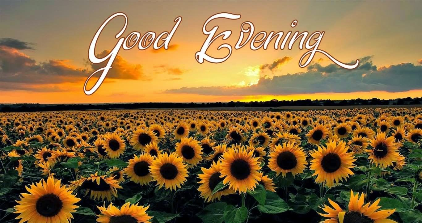 Good Evening Sunflowers Greeting For Brother