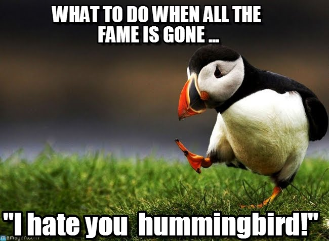 I Hate You Hummingbird Funny Image