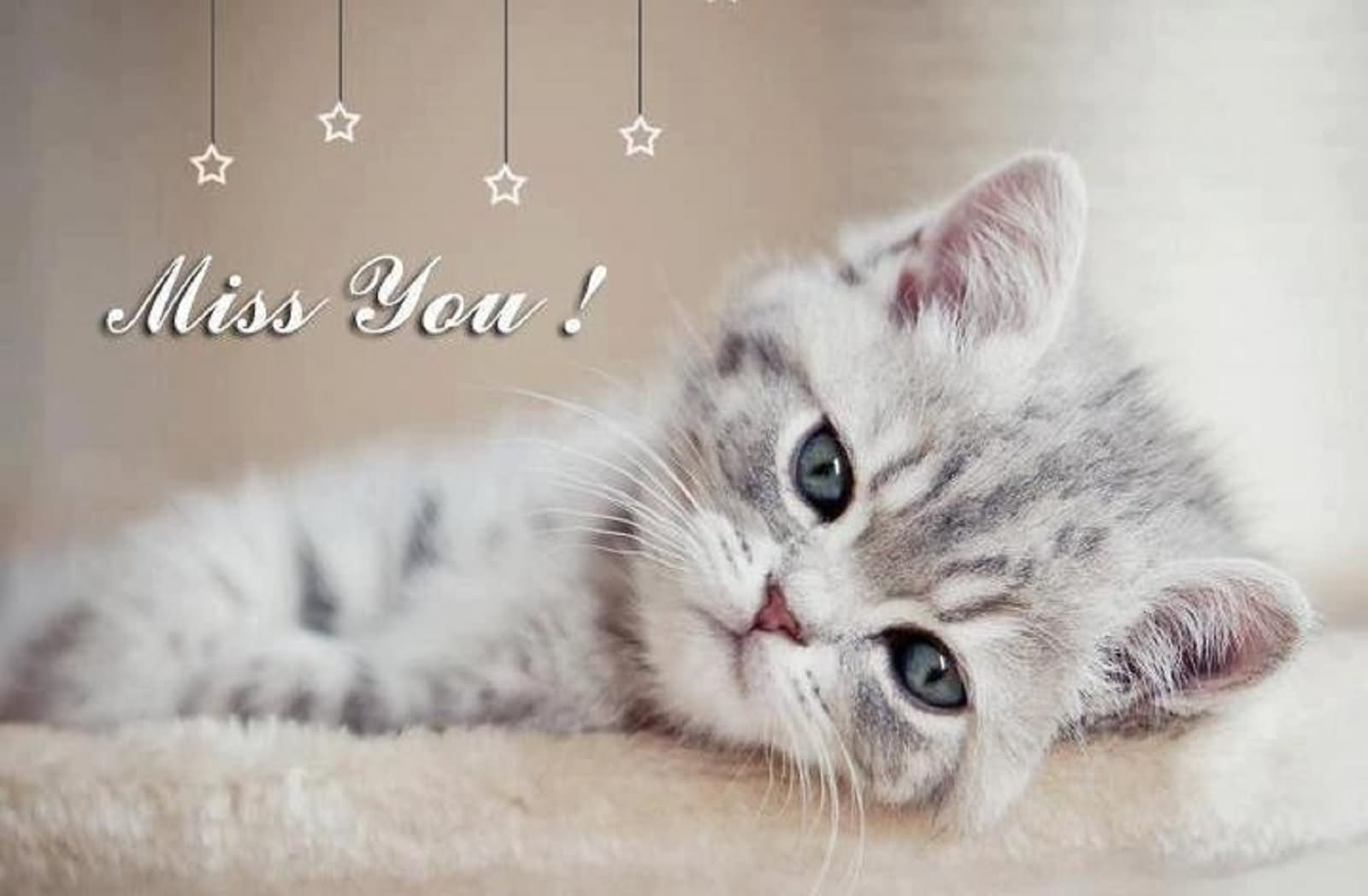 Miss You Sad Kitten Picture Image