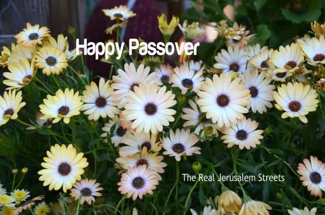 138-Happy Passover Wishes