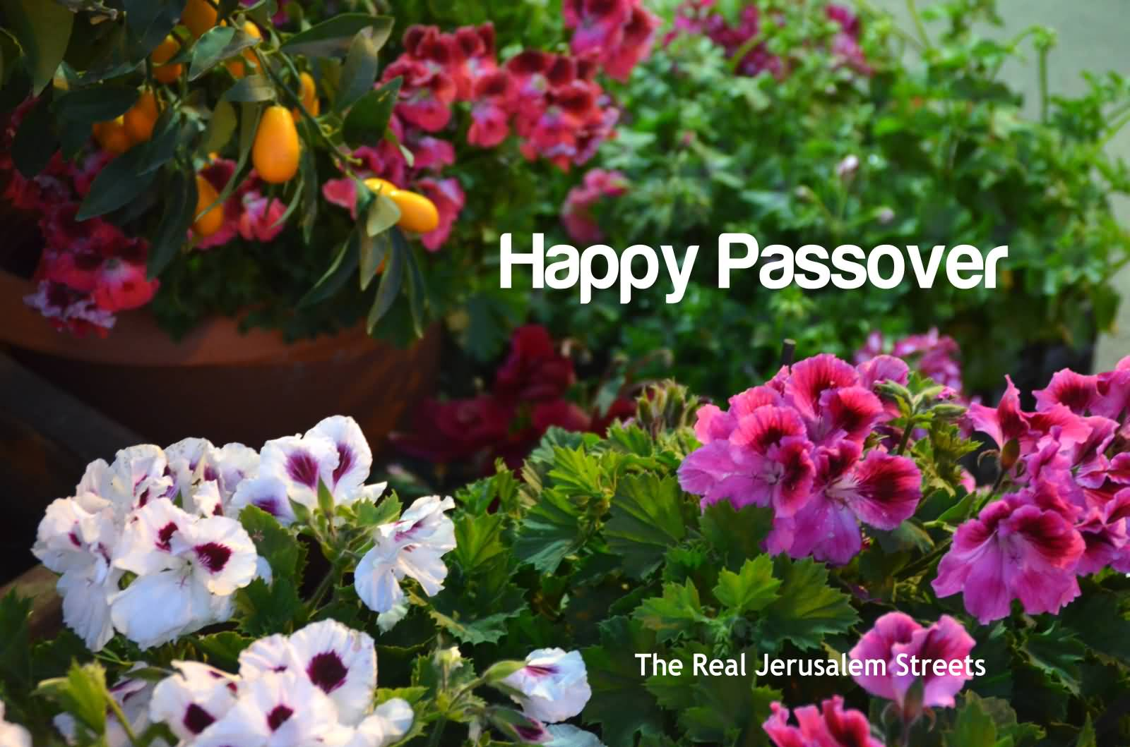Best greetings happy passover wishes image nicewishes 15 happy passover wishes m4hsunfo