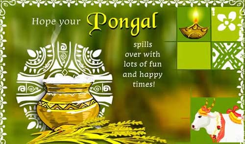 870-Happy Pongal Wishes