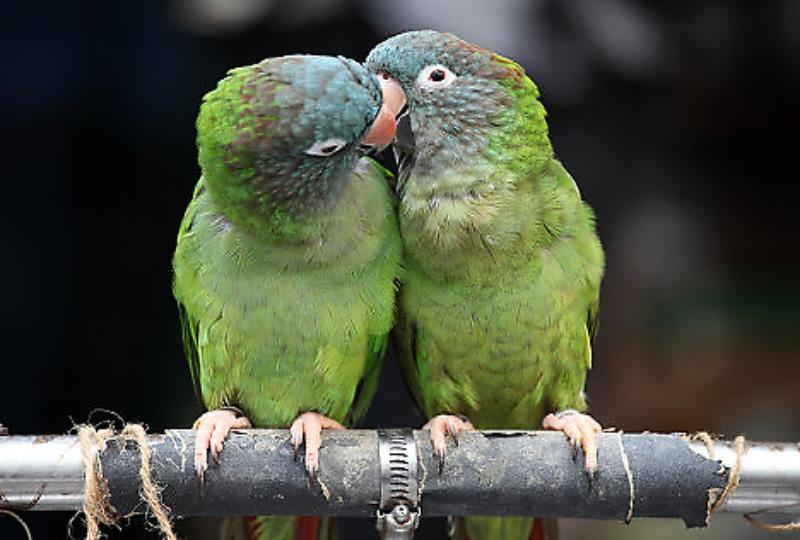 Impressive Kiss Day Photos