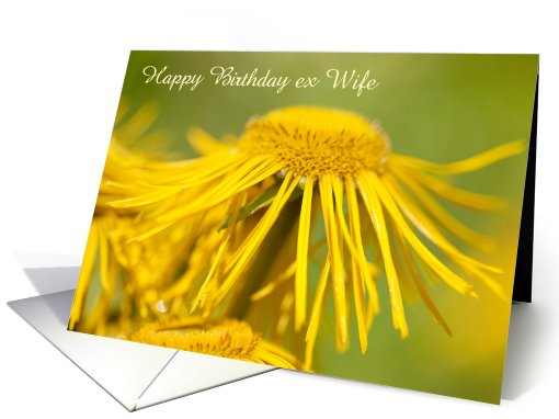 Simple E-Card Birthday Greetings For Ex