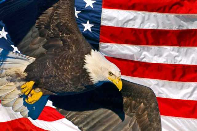 Best One American Eagle Day Wishes