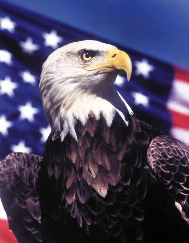 Eagle Image National American Eagle Day Wishes