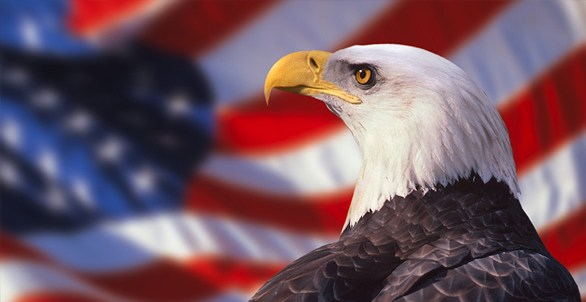 Hd Eagle Wallpaper Of National American Eagle Day