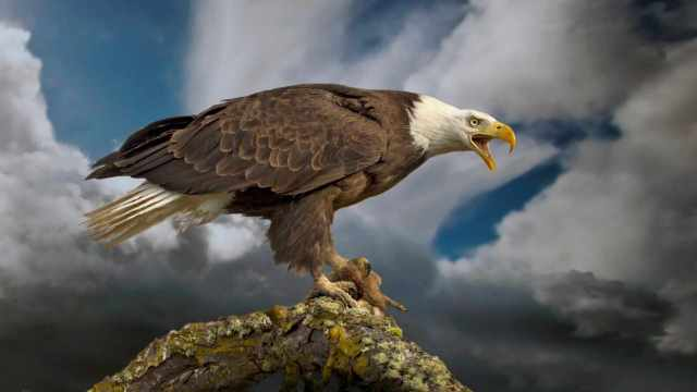 June 20th American Eagle Day Wishes