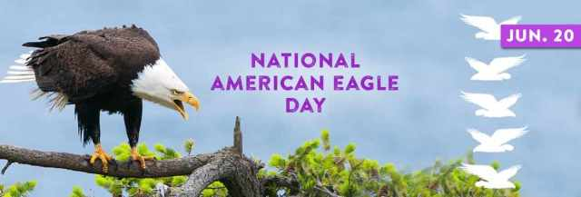 Nice Pic Of National American Eagle Day
