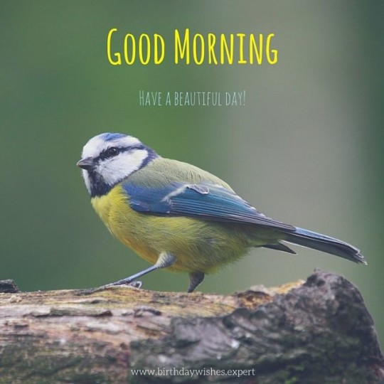 Good Morning Greeting For A Beautiful Day