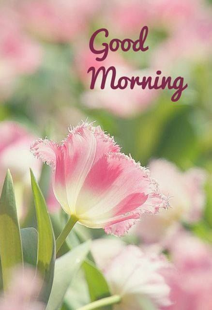 Morning Wishes And Greetings