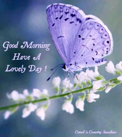 Morning Wishes For Lovely Day
