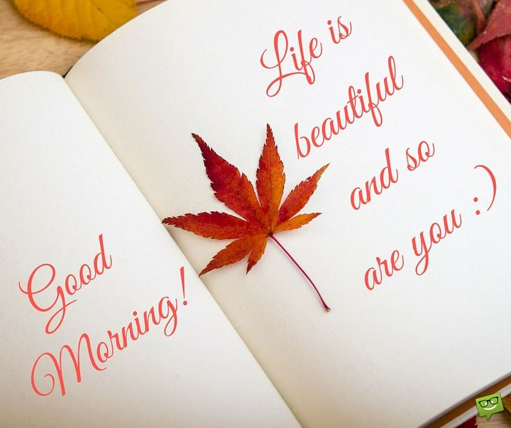 Morning Wishes With Maple Leaf