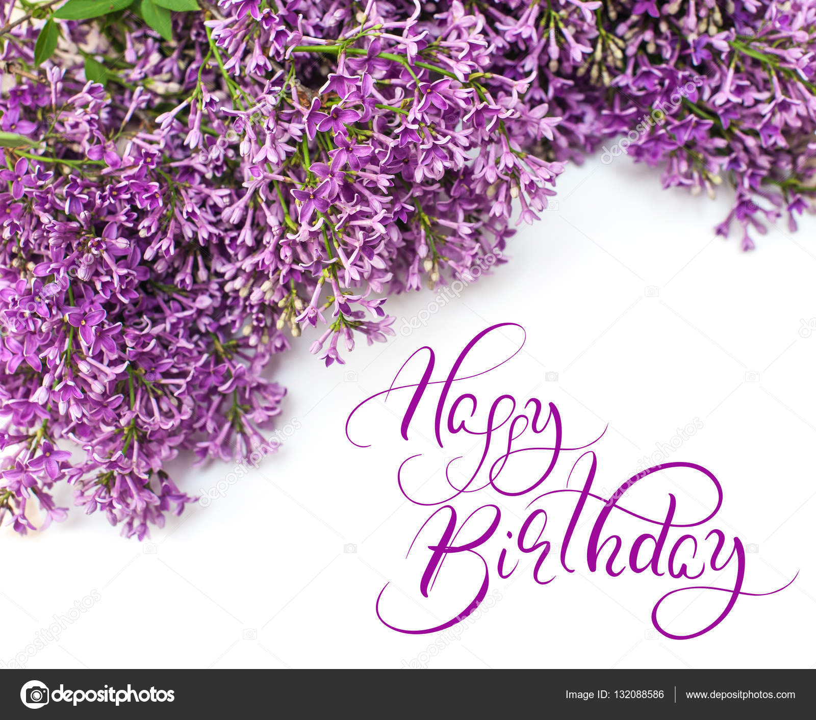 Beautiful lilac branch isolated on white background spring with text Happy Birthday. Calligraphy lettering.