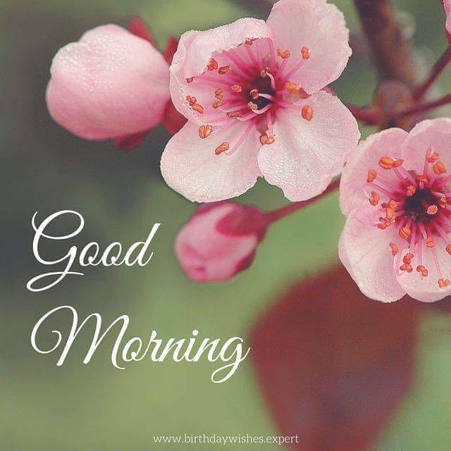 good morning wishes whatsapp messages (9)
