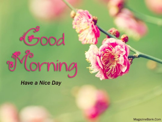 Captivating Good Morning Wishes For A Nice Day