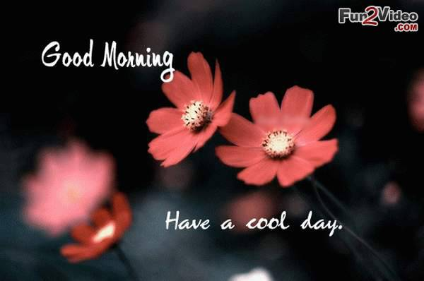Good morning greeting for a cool day with flowers nicewishes good morning greeting for a cool day m4hsunfo Gallery