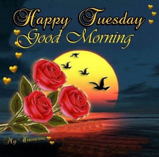Good Morning Greetings For Tuesday Morning Wishes With Couple Of Roses