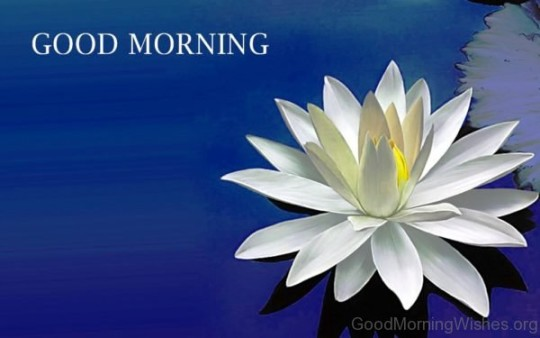 Good Morning Beautiful Cousin : Awesome white flower birthday wishes for cousin nicewishes