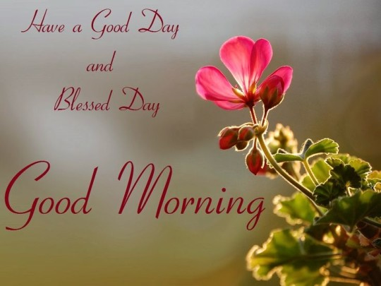 Good Morning Images For Blessed Day