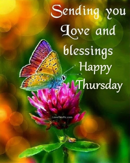 Good Morning Images With Flowers For Thursday Morning Wishes