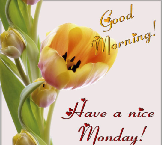 Good Morning Wishes For Monday