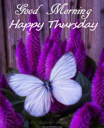 Good Morning Wishes For Thursday Morning