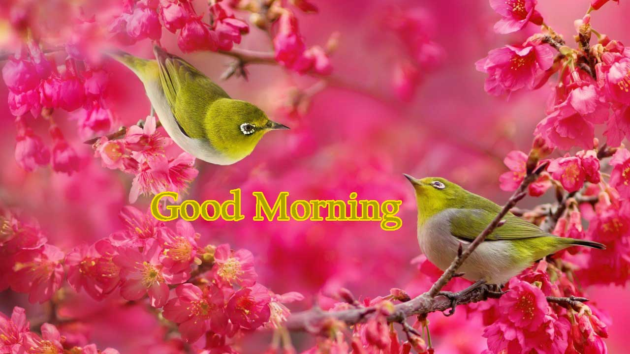 Captivating Good Morning Wishes With ...