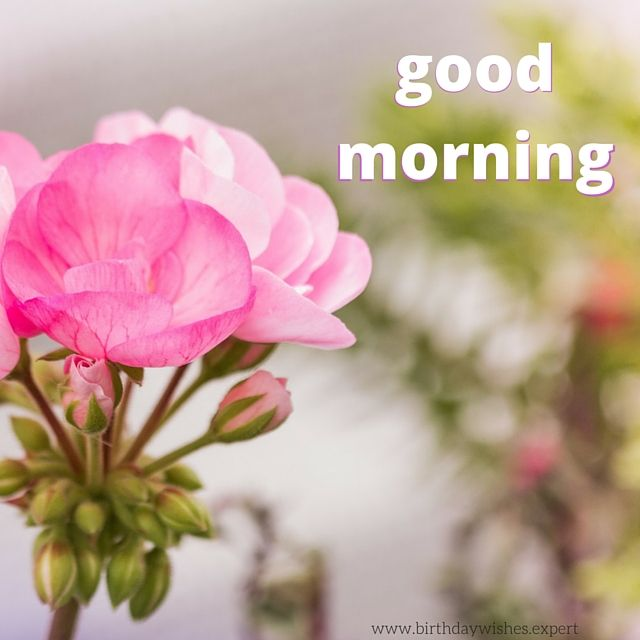 Good morning flowers sms images flowers healthy pictures of flowers with good morning messages flowers healthy good morning greetings flowers choice image greeting card designs flowers morning sms m4hsunfo