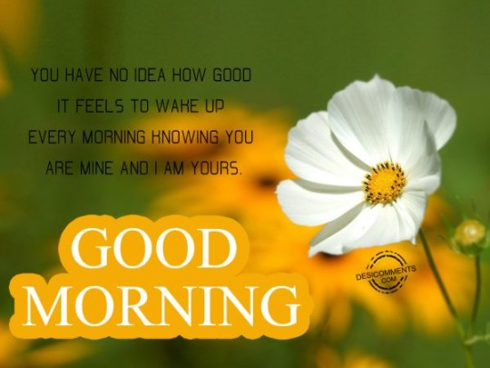 Good Morning Wishes With White Flowers With Quotes