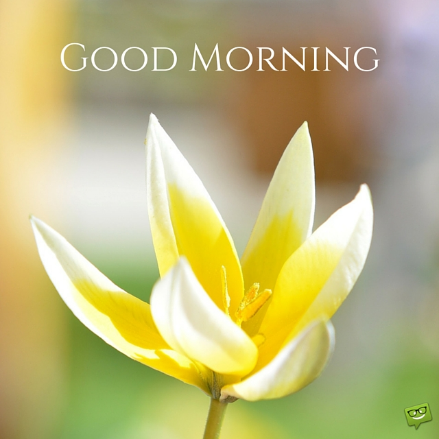 Yellow flower good morning pic flowers healthy majestic good morning wishes with yellow flower nicewishes mightylinksfo